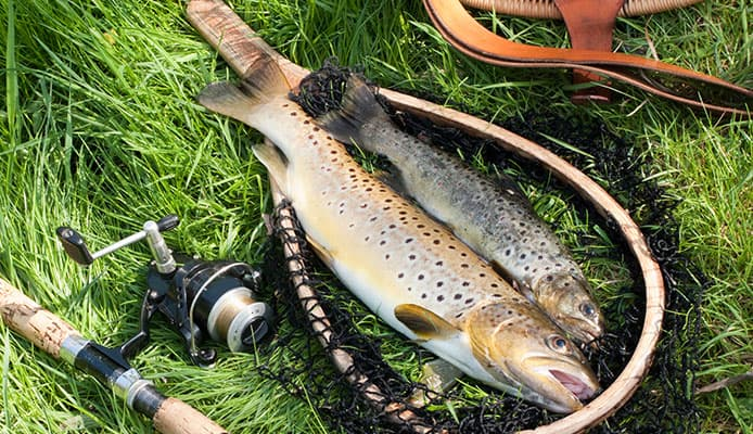 fishing reel for trout